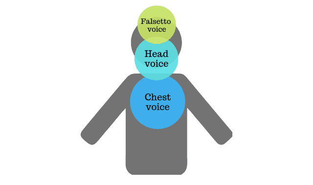 Falsetto vs head vs chest voice