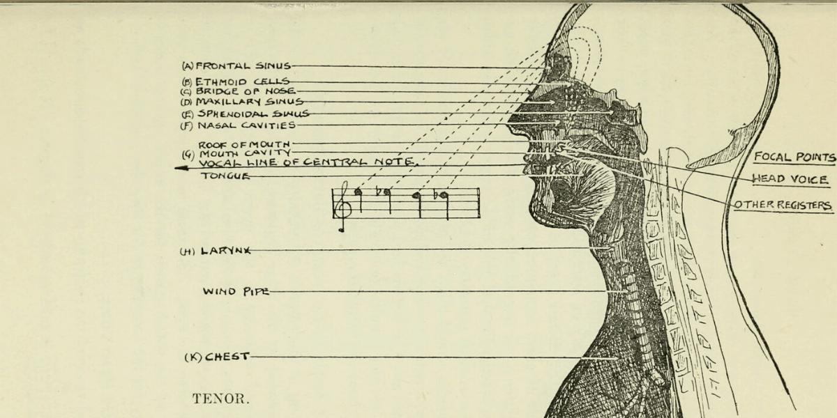 head voice.