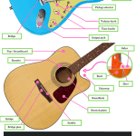 Guitar Anatomy 101